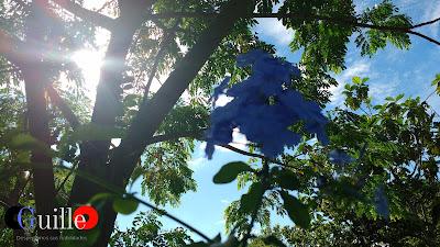 Fotografía del SOL penetrando ENTRE LOS ARBOLES - CGuilleO