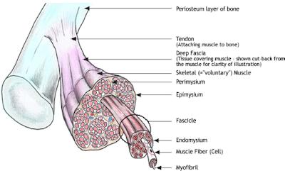 fascia flow