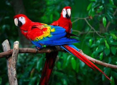 Animals That Start With P - Parrot
