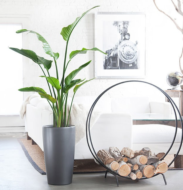 Best Indoor Plants to Grow