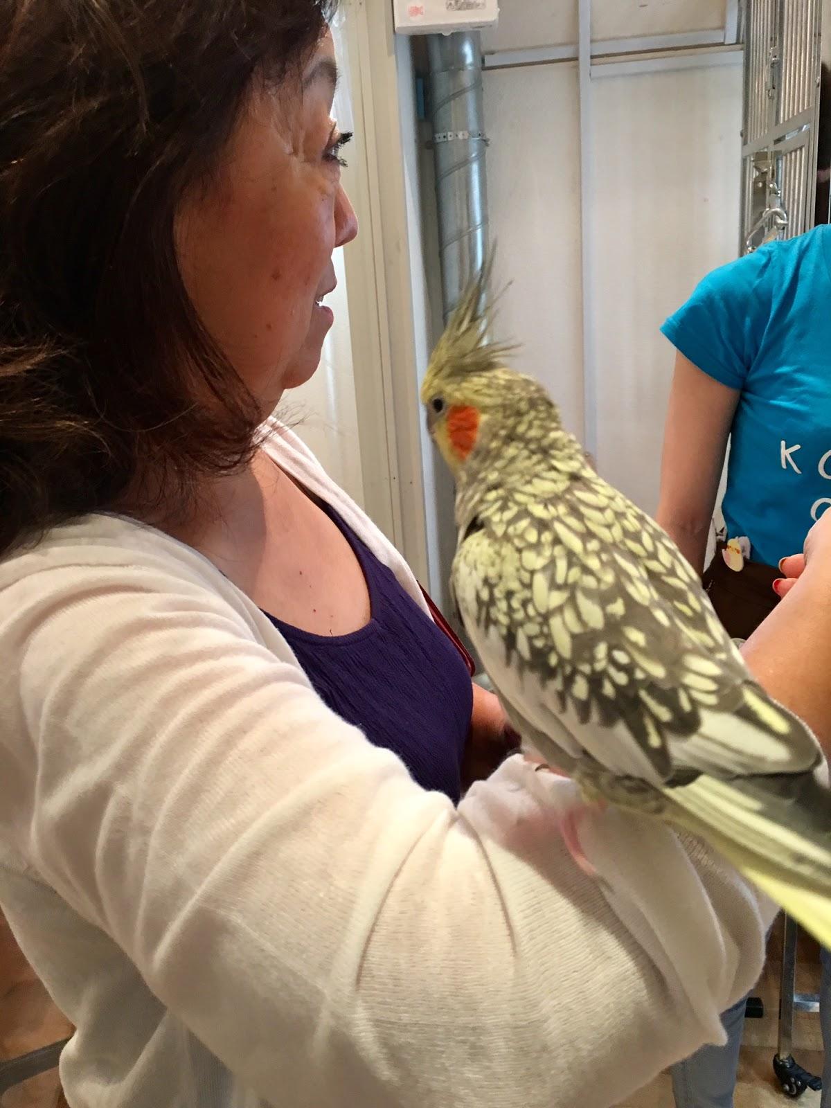 Bird Cafe Japan