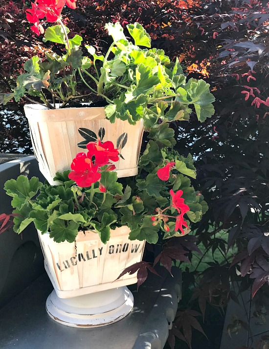 Geraniums in a Tiered Tray Basket Planter.