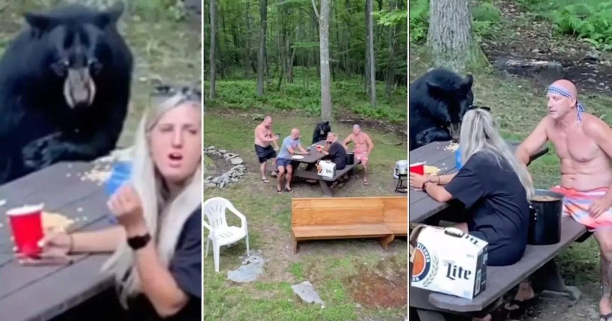 Video Shows A Wild Black Bear Sitting Down For A Picnic With A Family In Maryland