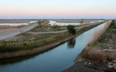 Canales en la laguna Encanyssada