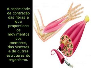 Número de Repetições para Hipertrofia - Contração Muscular