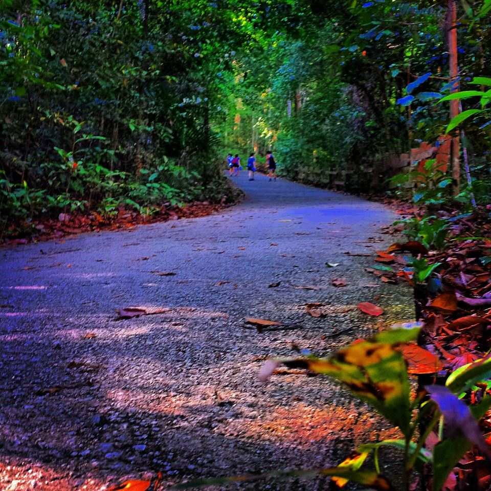 Bukit Timah Nature Reserve: Things To Do in Singapore