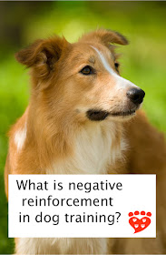 A guide to negative reinforcement & the alternatives, illustrated by a beautiful collie dog looking to the side