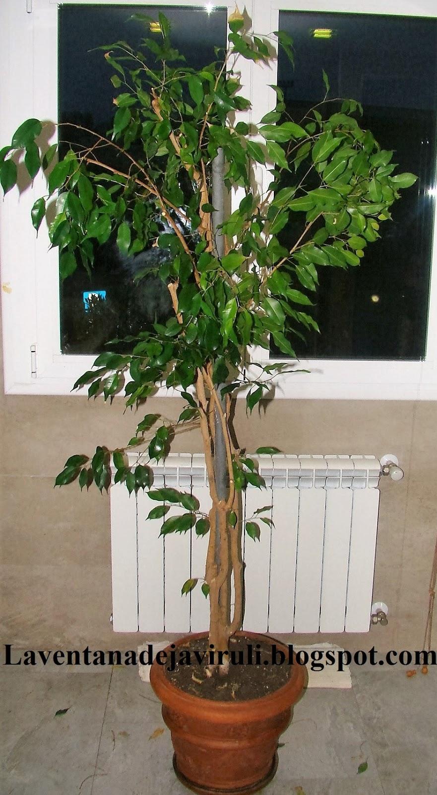 Plantas bonitas de interior - Plantas de interior online ...