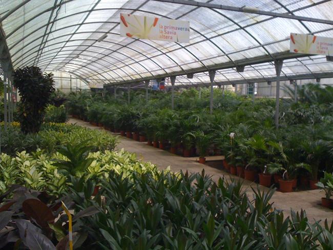 Visita a viveros guzm n paisaje libre for Viveros de plantas en renca
