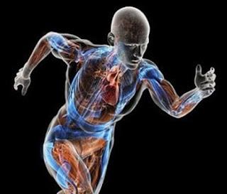 http://mustahabbah.blogspot.com/2016/03/tips-dan-cara-meningkatkan-metabolisme.html
