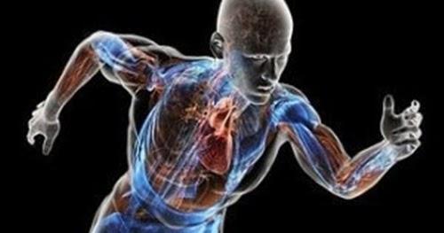 Pengertian dan Proses Metabolisme