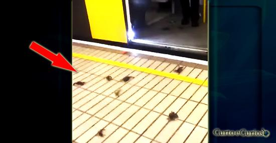 Bizarra invasão de caranguejos em estação de metrô apavora passageiros