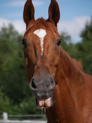 Kuvahaun tulos haulle hassu hevonen