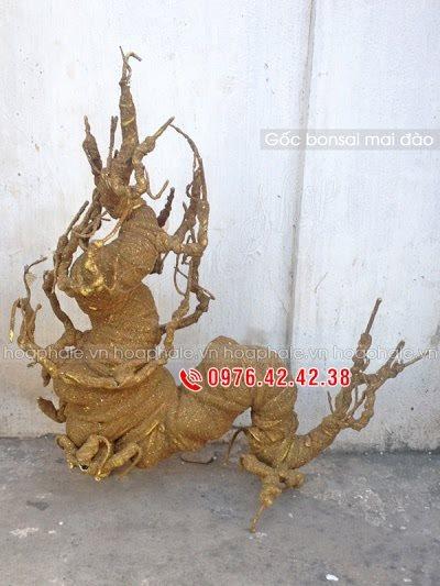 Goc bon sai tai Duong Khue