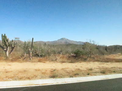 scenery near San Jose del Cabo