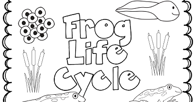 The Paper Maid: Frog Life Cycle