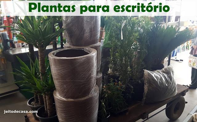plantas- para -ambientes-comerciais