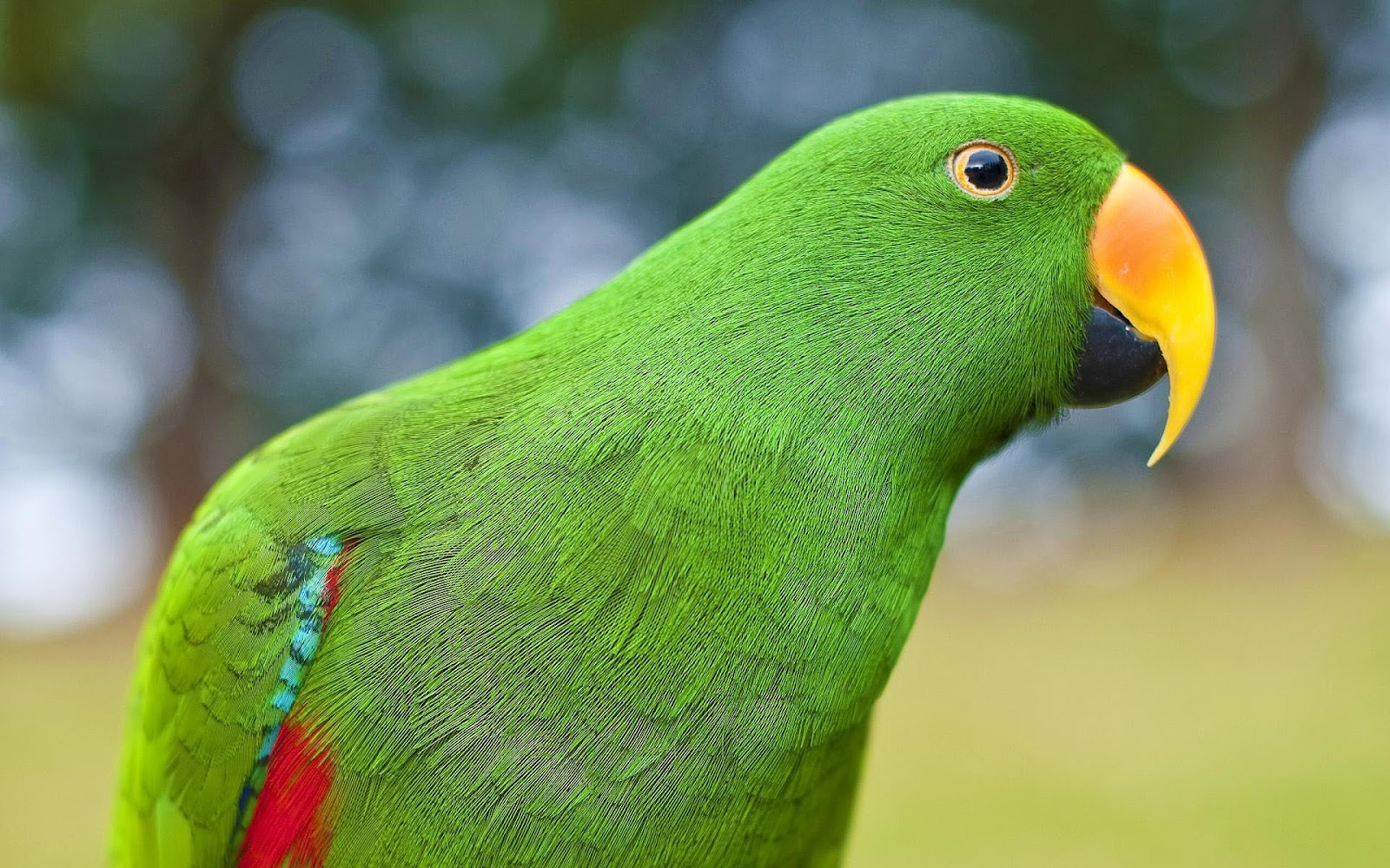 Parot Wallpapers Parrot Hd Wallpapers Earth Blog