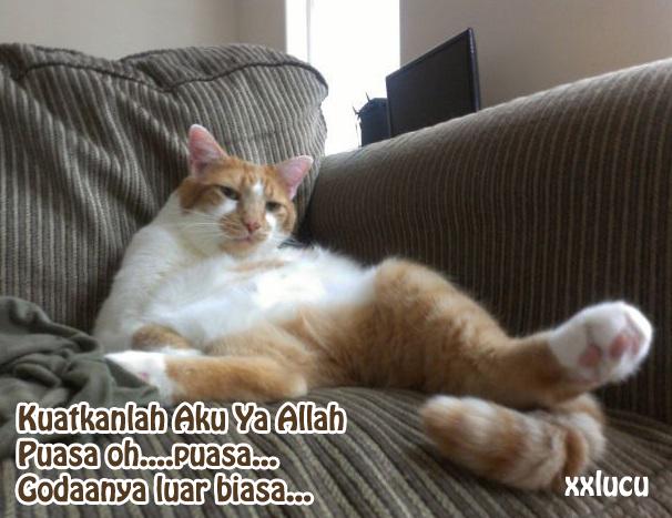 gambar kucing sedang puasa
