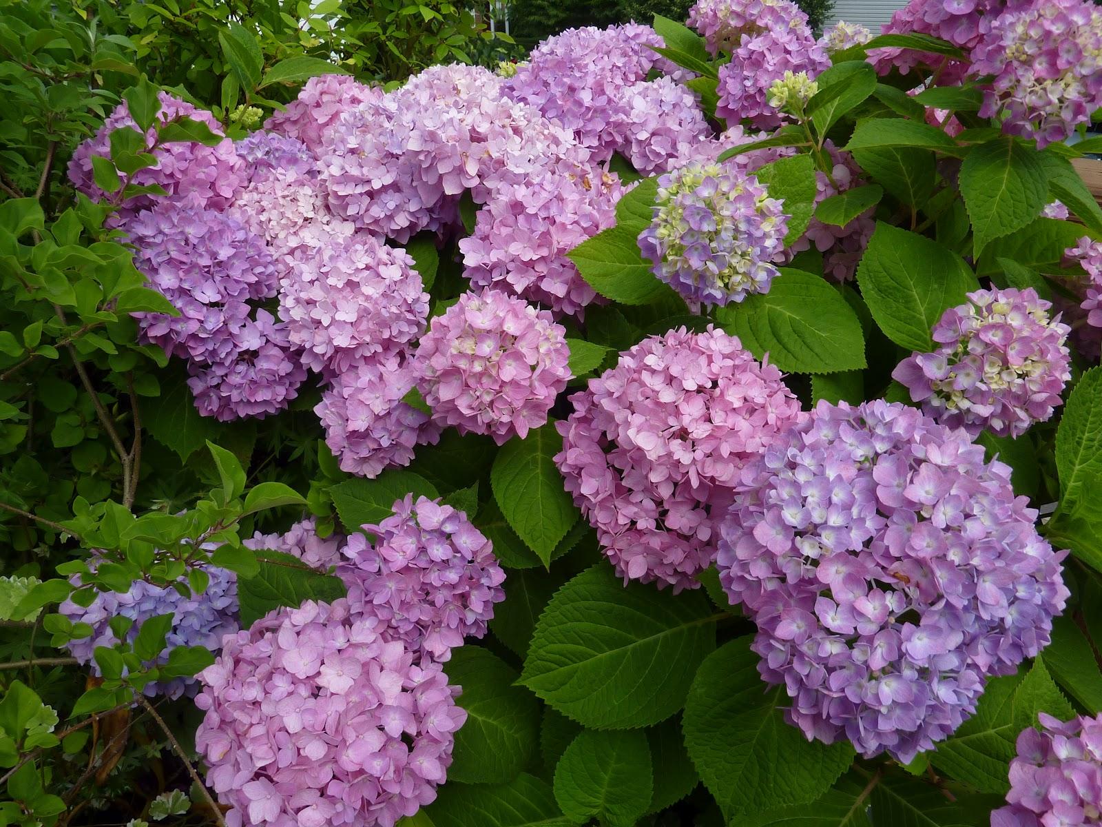 Flat Bottom Flowers: Hydrangea Heaven