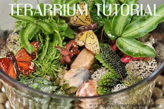 Tutorial DIY Terrarium