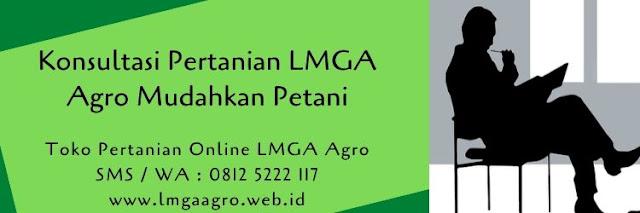 konsultasi,pertanian,petani,budidaya jagung manis,budidaya jagung,benih jagung manis,budidaya tanaman