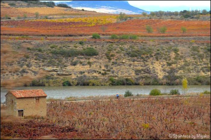 El Tren del Vino de La Rioja 北スペイン・リオハの紅葉する景色をワイン列車の車窓から