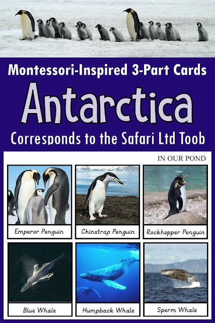Antarctica 3-Part Cards from In Our Pond #montessori #homeschooling #montessorischool #handson #antarctica #explore #animals
