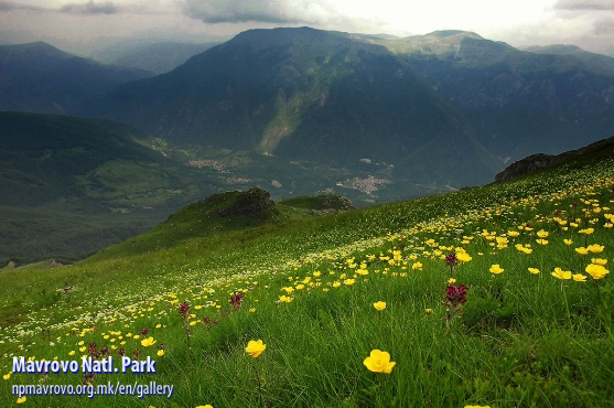 Flowers thrive on a hillside near Deshat Mountain in western Macedonia.