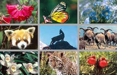 especies y desarrollo sustentable