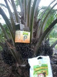 pupuk organik untuk kelapa sawit