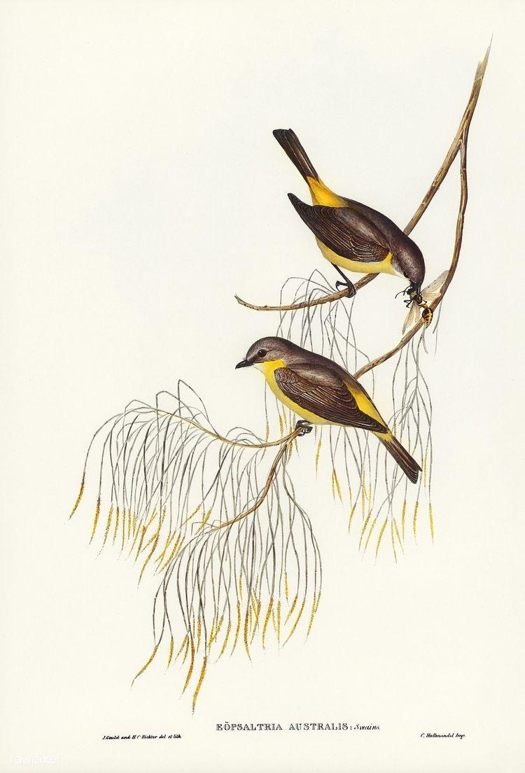 Aves | Ilustração