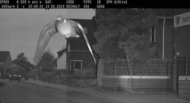Pombo 'ultrapassa limite de velocidade' e é fotografado por radar na Alemanha