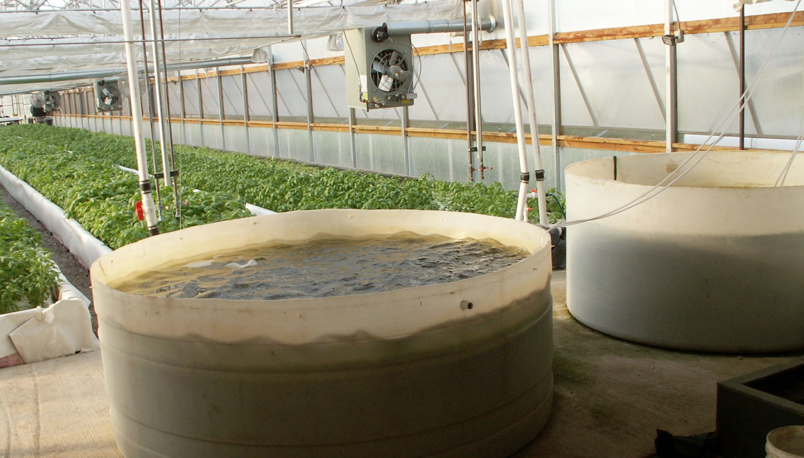 The trouble with aquaponics | Illinois-Indiana Sea Grant