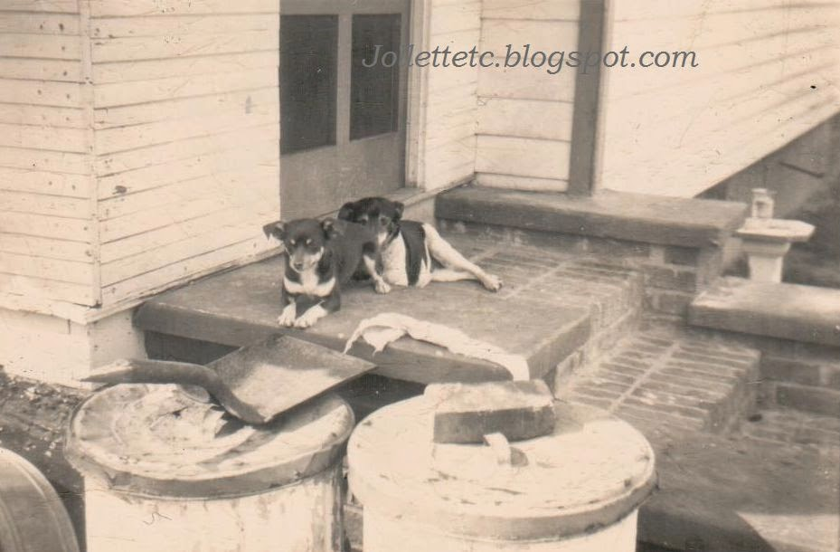 Slade dogs on Tanner Place, Portsmouth, VA 1940s  http://jollettetc.blogspot.com