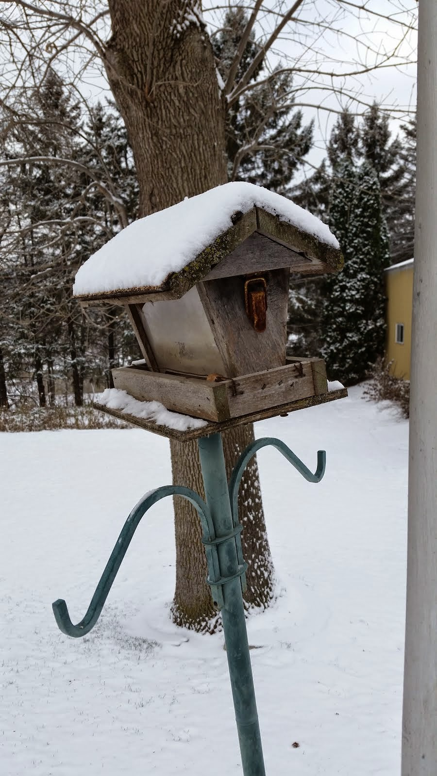 Backyard birdhouse snowed in