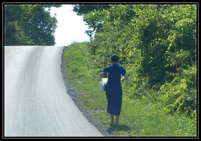 New York Amish