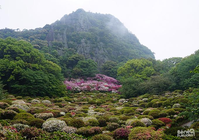Mifuneyama rakuen, Saga