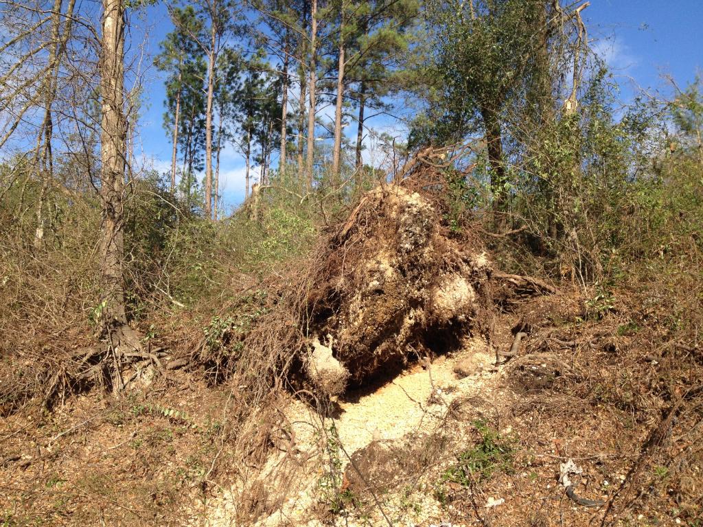The Original Weather Blog The Tornado Chronicles Grove