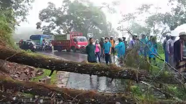 Pohon Tumbang Putuskan Akses Jalan Kabupaten Toraja Utara-Palopo, Ketua DPRD Tana Toraja Ikut Terjebak