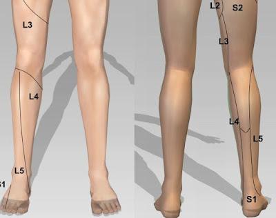 dermatome myotome area lutut anterior posterior