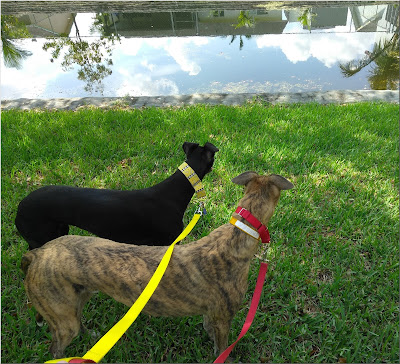 Dusty and Jagger taking in the water view