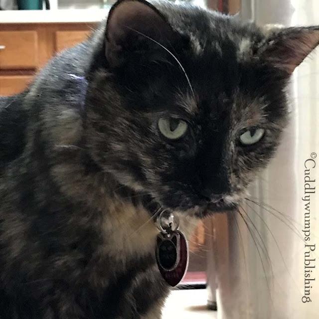#catselfies #tortiecats