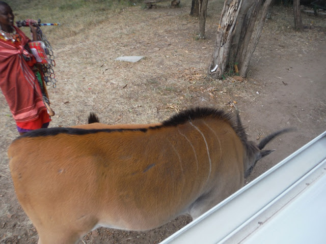 Antílope, eland macho, a la entrada de Masai Mara