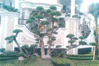 Galeri Taman - Tukang Taman Surabaya 89