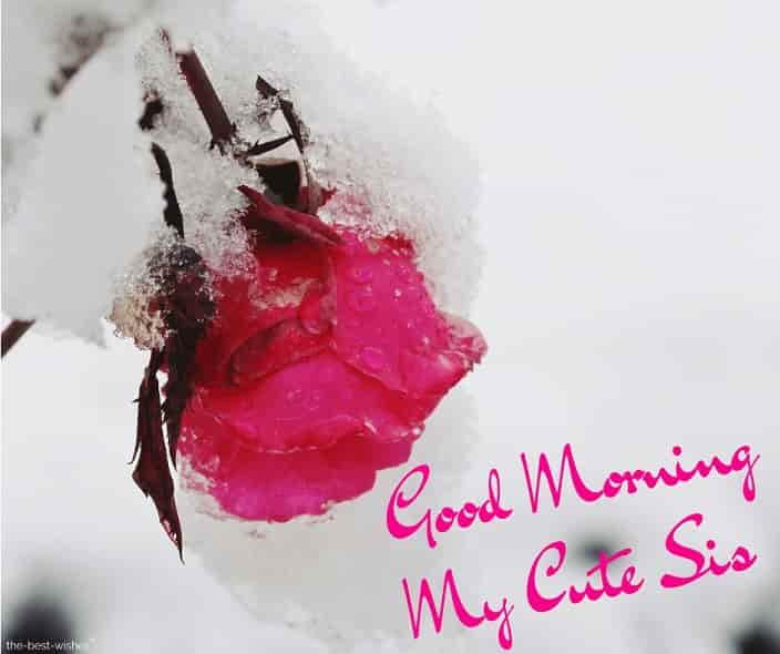 good morning cute sister