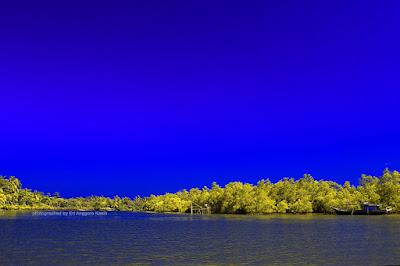 View sekeliling kawasan konservasi mangrove Batu Karas.