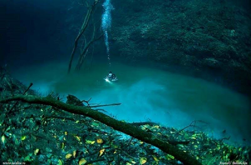 A cenote is a water filled cave, and this one holds quite a surprise.