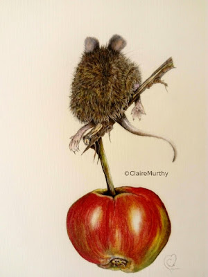 Bird Art Auction. SBBOT. Wildlife Drawing. Art workshops in Kent, Surrey, London, Sussex.
