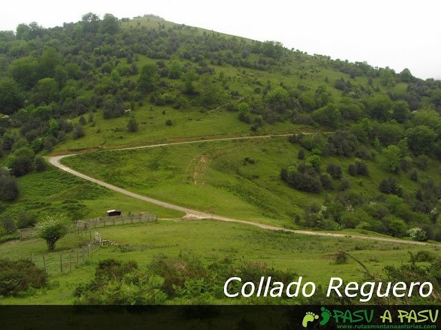 Collado Reguero